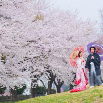 桜の丘にて