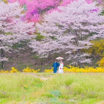 2種類の桜と一緒に