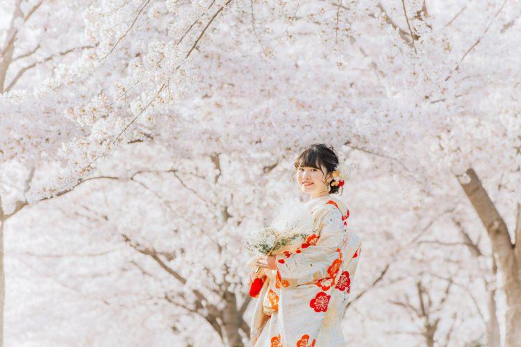 一年で一番人気の『桜ロケーション』満開の桜に囲まれて撮影,Studioクラシクス