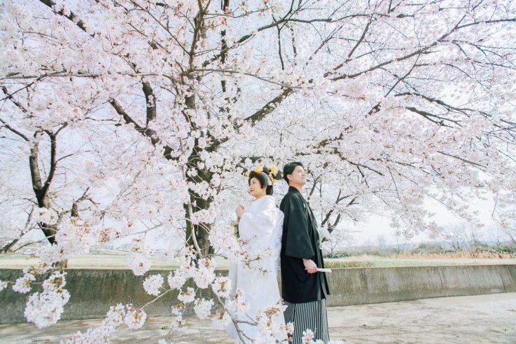 桜、白無垢、春のフォトウエディング